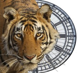 Save the tiger with tigertime.info